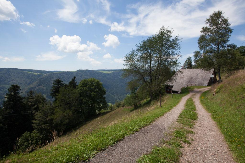 Schwarzwald Trails Natur