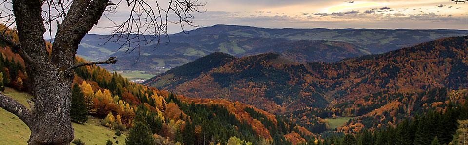 Schwarzwald Berglauf Panorama