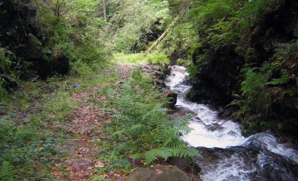 Trailrun Masters Trail Strecke